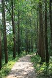 Une allée pavée dans une forêt Βιετνάμ Στοκ εικόνα με δικαίωμα ελεύθερης χρήσης