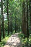 Une-allée pavée dans une forêt Vietnam lizenzfreies stockbild