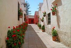 Une allée complètement des arbustes fleurissants rouges et des planteurs de terre cuite accrochant sur du vieux les murs externes images stock