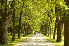 Une allée d'un parc. Image stock