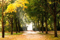 Début d'automne Image libre de droits