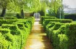 Une allée verte Photo libre de droits