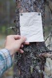 Une annonce, une lettre, un message sur un arbre dans la forêt Image libre de droits