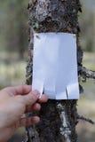 Une annonce, une lettre, un message sur un arbre dans la forêt Photos stock