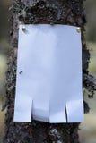Une annonce, une lettre, un message sur un arbre dans la forêt Photo libre de droits
