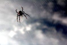 Une araignée Photos libres de droits