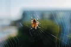 Une araignée au milieu de son propre Web Photo libre de droits