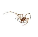 Une araignée détruit une fourmi. Photographie stock