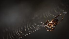 Une araignée tournant son Web images libres de droits