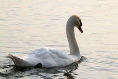 Une aube sur le lac Images libres de droits
