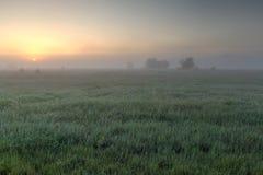Une aube tôt le matin je photos libres de droits