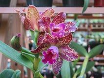 Une autre orchidée dans le jardin Image stock