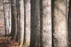 Une avenue des arbres Photographie stock libre de droits