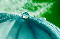 Une baisse de rosée de l'eau sur un macro en gros plan de plume pelucheuse avec le bokeh de scintillement sur le bleu a brouillé  Photo libre de droits
