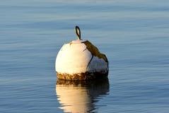 Une balise blanche d'isolement flottant sur un lac bleu Photos libres de droits