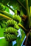 Une banane Photos stock