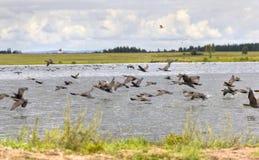 Une bande d'oiseaux Images libres de droits