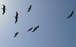Une bande de mouettes volant au-dessus de la mer Photographie stock libre de droits