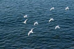 Une bande de mouettes volant au-dessus de la mer Images libres de droits