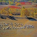 Une bande de moutons Images stock