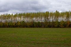 Une bande des arbres le long de la route photographie stock