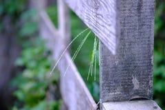 Une barrière en bois avec des fleurs d'herbe émerge images libres de droits