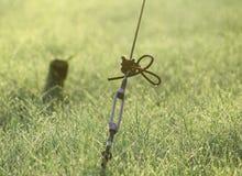 Une barrière et herbes avec de belles baisses de rosée Image stock