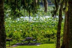 Une belle aire de pique-nique de parc avec les arbres, la mousse espagnole, la Lotus Water Lily Pad Flowers jaune de floraison et  photographie stock