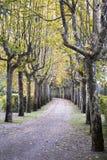 Une belle avenue délimitée par des arbres Image libre de droits