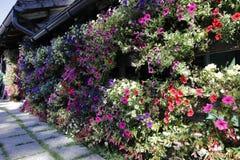 Une belle décoration de fleur avec des pentuias sur une hutte de montagne en Autriche photographie stock