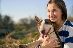Une belle femme portant un pullover ray? ?treignant un chien de bull-terrier sur un fond de champ photos stock