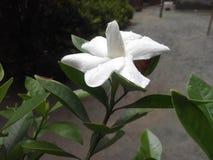 Une belle fleur Photo libre de droits