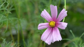 Une belle fleur balançant dans le vent banque de vidéos