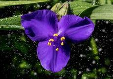 Une belle fleur bleue, particules se déplaçant à l'arrière-plan images libres de droits