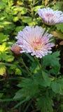 Une belle fleur classique photographie stock