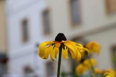 Une belle fleur d'or photos libres de droits