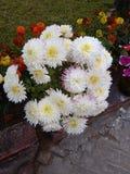 Une belle fleur mise en pot photographie stock