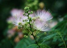 Une belle fleur verte dedans d'automne Photographie stock
