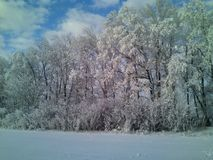 Une belle forêt en hiver Images libres de droits