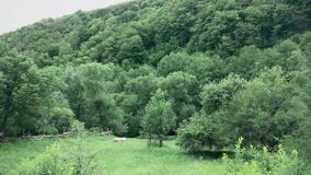 Une belle montagne avec une forêt dans la distance d'un pâturage de moutons banque de vidéos