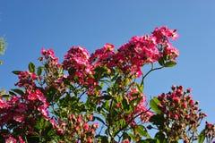 Une belle roseraie à Amsterdam Photographie stock libre de droits