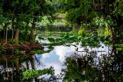 Une belle scène de nature avec un dock de pêche, une surface vitreuse de lac, des arbres verts, des nénuphars, et une jacinthe d'e photos stock