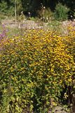 Une belle splendeur florale jaune image stock