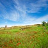 Une belle zone des pavots sous le ciel bleu Image libre de droits