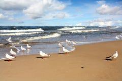 Une belles plage et mouette images libres de droits