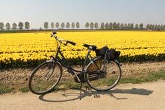 Une bicyclette devant un champ jaune de tulipe en Hollande à un jour ensoleillé au printemps photos libres de droits