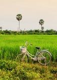 Une bicyclette sur le champ de déchirer Images libres de droits