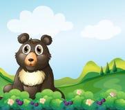 Une Big Bear se reposant dans le jardin Images stock