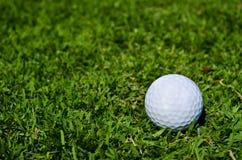 Une bille de golf sur la zone verte photographie stock libre de droits