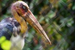 Une birdie et son regard grave images libres de droits